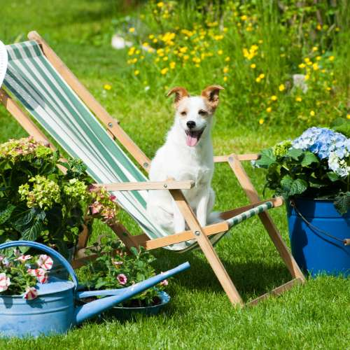It's the Year of the Dog at Southport Flower Show    Visitors to the Southport Flower Show can bring along a very special guest this summer – their pet dog.        For the first time in the event's 89-year history, families are welcome to bring along their four-legged friends to the seaside venue...